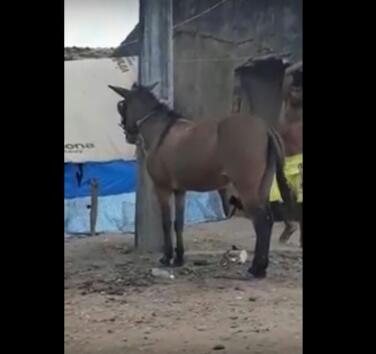 Vídeo com imagens fortes de homem golpeando cavalo chocainternautas