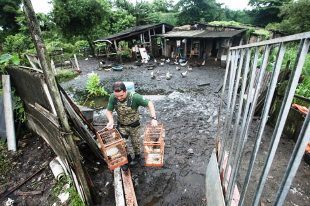 Criação ilegal de animais é desmantelada em Praia Grande,SP