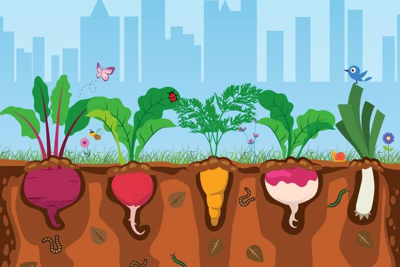 Cartilha ensina passo a passo de hortas orgânicas em espaçosurbanos