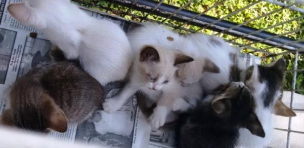 Homem é identificado após abandonar 9 gatos e leva multa de R$ 27 mil em Marília(SP)