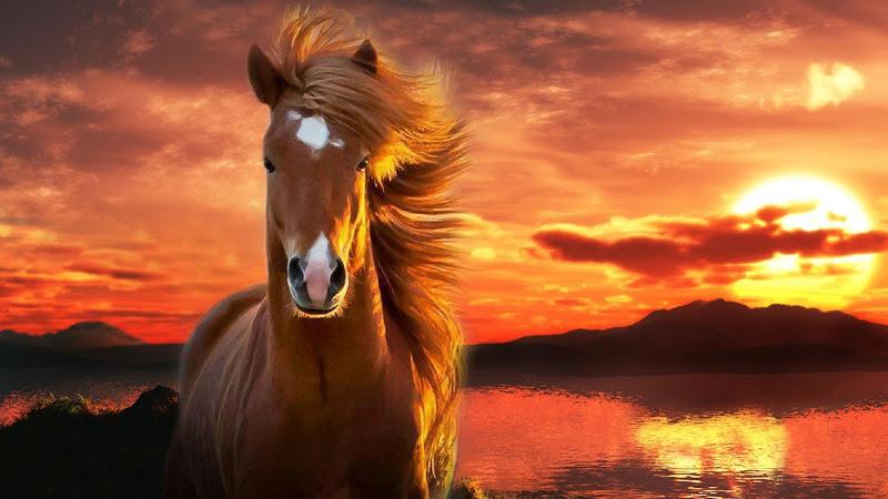 Cavalos selvagens são ameaçados de extinção pela indústriaagropecuária