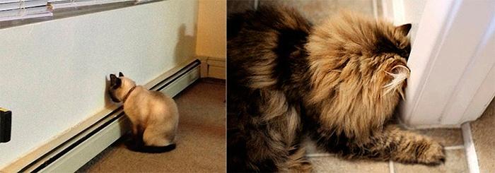 Se Você Vir Seu Gato Fazendo Isso, Vá Para o Veterinário Imediatamente. Você Pode Provavelmente Salvar a VidaDele