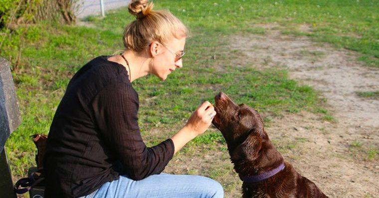 Nova pesquisa mostra que as pessoas que falam com animais são maisinteligentes