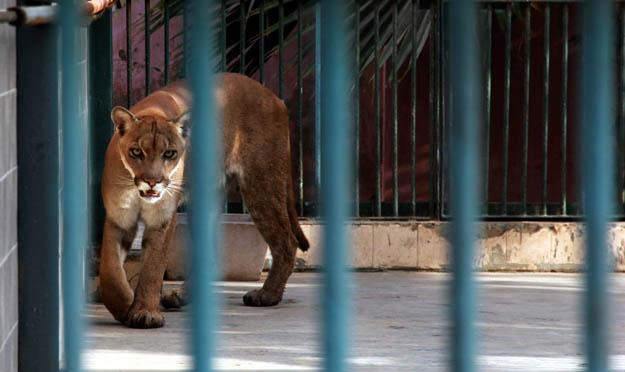 Animais psicologicamente destruídos, continuam sofrendo em Zoológicos #BoicoteZoo's
