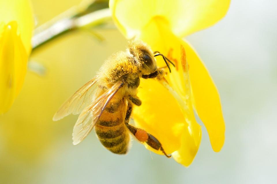 Europa a um passo de proibir pesticidas que prejudicam asabelhas