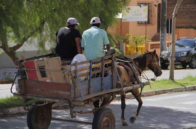 Projeto de lei busca acabar com o sofrimento de animais em carroças em Teresina(PI)
