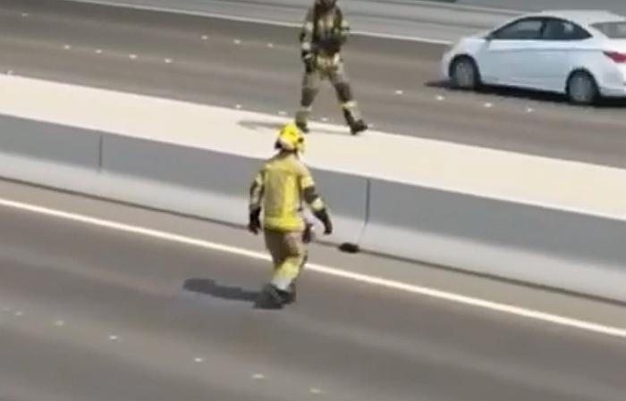 Autoestrada em Abu Dhabi é fechada para resgate de gato navia