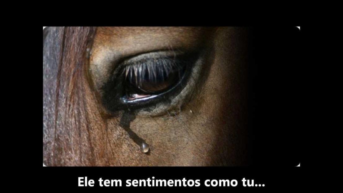 Após anos de trabalho forçado, aos cavalos, sobra o abandono e osmaus-tratos