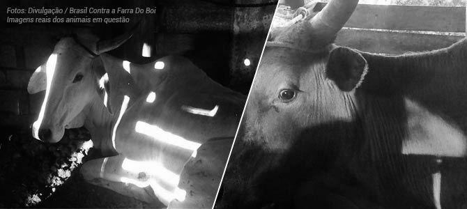 Governo de Santa Catarina confirma que matou animais resgatados e não há mais o quefazer