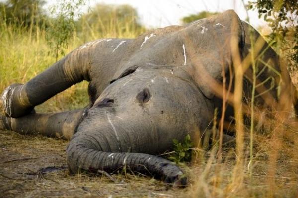 Caça e tráfico de animais selvagens atingem quase 50% das áreas de patrimôniomundial