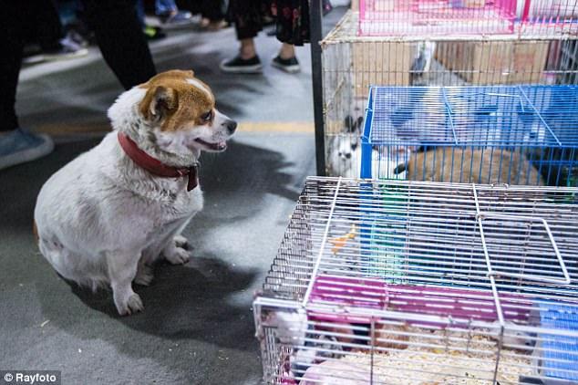 Cachorra visita mercado chinês diariamente para evitar venda de filhotesrecém-nascidos