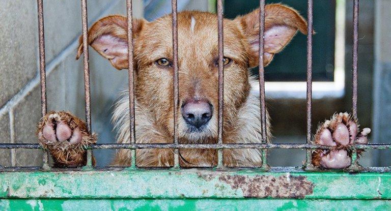 Taiwan proíbe consumo e comércio de carnes de cachorro egato