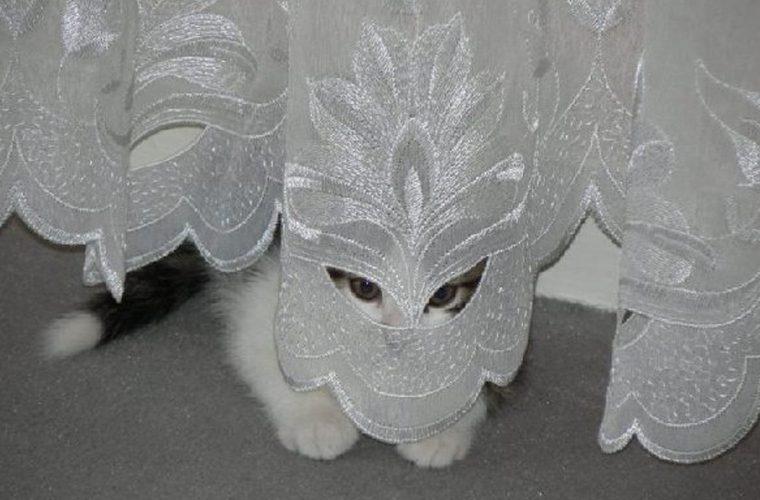 21 fotos de gatos que pensam que estão bem escondidos- Morri de rir com on°15