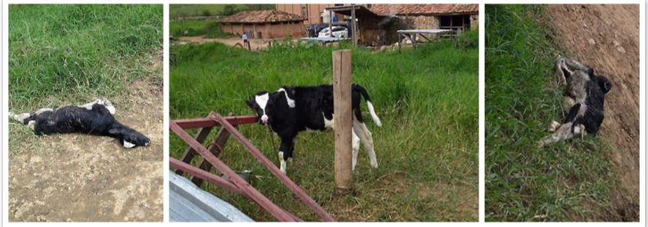 Homem visita fazenda de queijos no interior de São Paulo e fica horrorizado com o quevê.