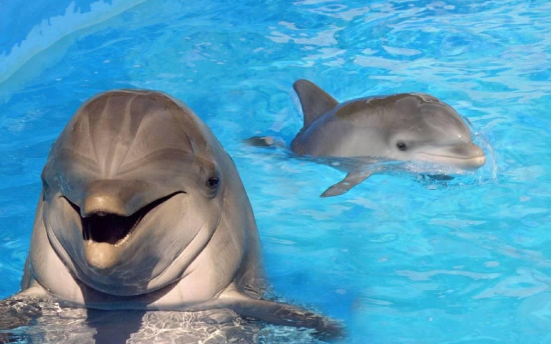 Golfinhos são libertados após viverem confinados em aquário durantedécadas