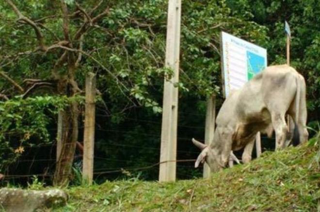 Polícia prende três suspeitos de organizar farra do boi em PortoBelo