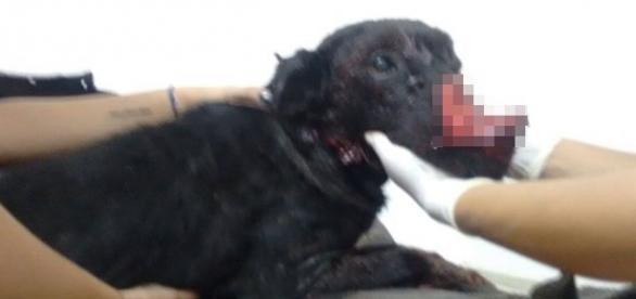 A procura de comida no lixo, cão é golpeado por homem noRS