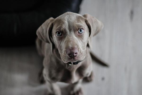 A Ciência confirma que os cães podem identificar se alguém é uma mápessoa!