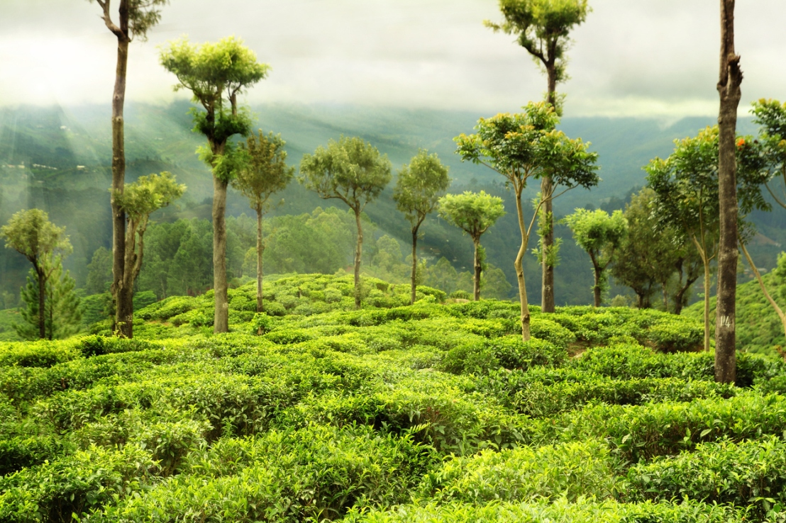 Índia planeja investir 6,2 bilhões de dólares para criar novasflorestas