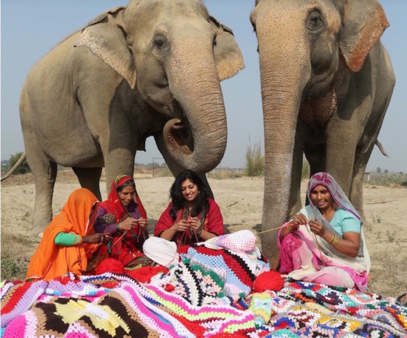 Mulheres de vilarejo indiano tricotam roupas para proteger elefantes locais dofrio