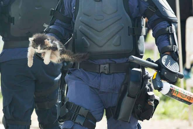 DF: Gato arremessado durante protesto na Esplanada dos Ministérios pode perder apata