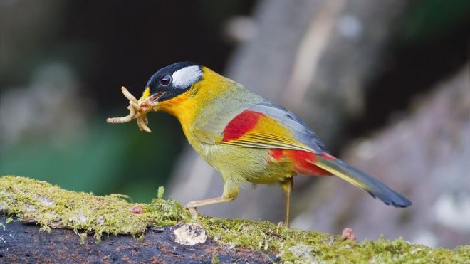 Morte de 85 aves transportadas dentro de mala mostra a perversidade do tráfico deanimais