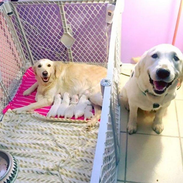 16 memes de cães felizes que  farão você sorrir de orelha àorelha
