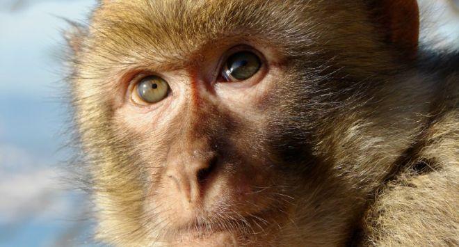 Vietnam Airlines para de transportar macacos destinados ao abuso delaboratórios