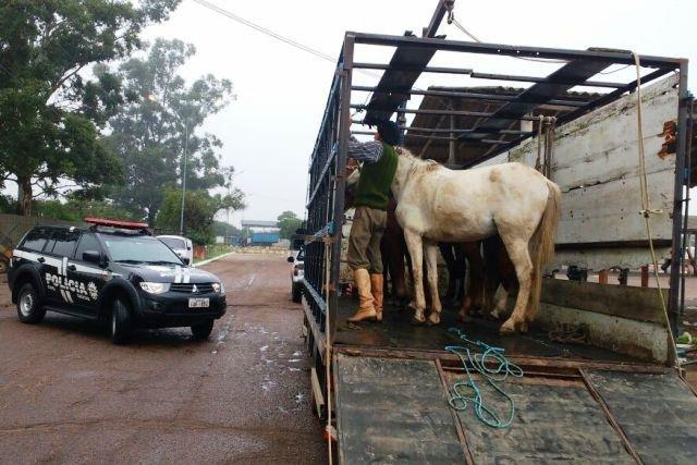 Cavalos explorados e maltratados são resgatados em Porto Alegre(RS)