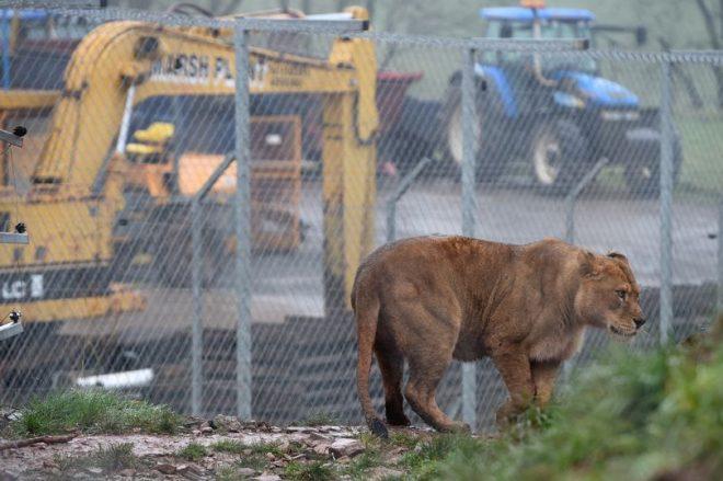 Proprietário de zoológico vende 300 animais para reserva decaça