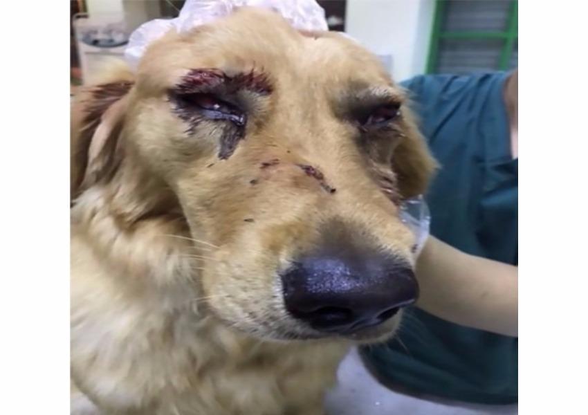 Cachorro é agredido brutalmente por funcionários de aeroporto naChina