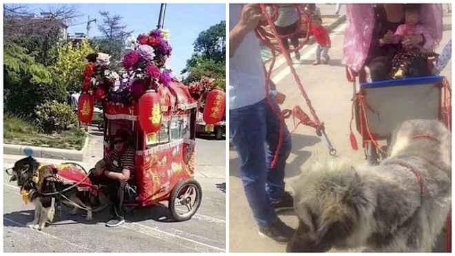 Crueldade: cães são obrigados a puxar carruagens cheias degente