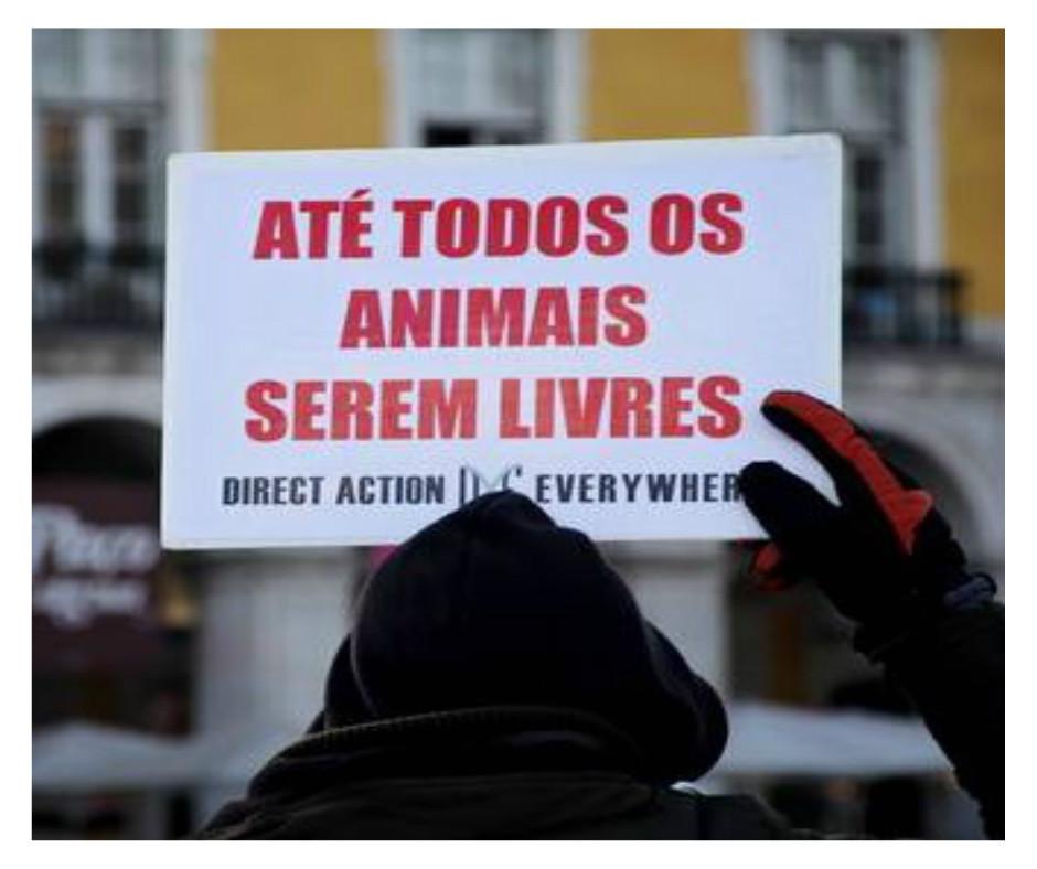 DXE São Paulo em mais uma ação contra o holocaustoanimal