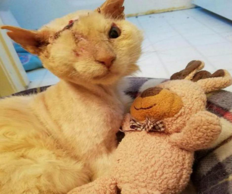 Esse gato era tão gentil e amoroso que quase morreu por causa disso.  :( :'(  Como ele está hoje? Quetransformação!
