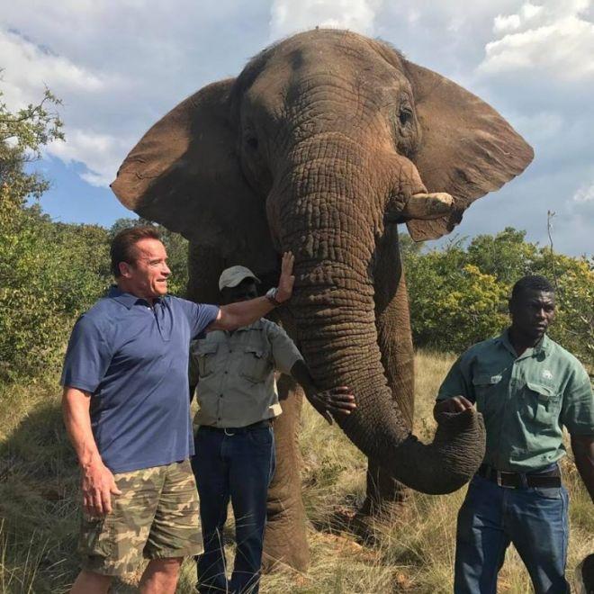 Arnold Schwarzenegger alerta sobre a crueldade do comércio demarfim
