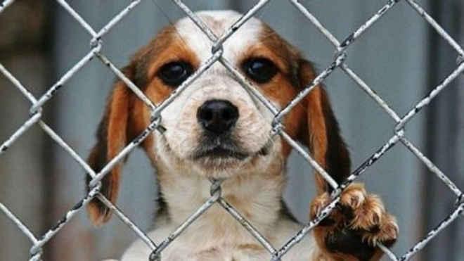Costa Rica aprova lei que pune com prisão maus-tratos de animaisdomésticos