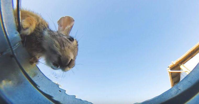 Ele esconde a câmera no balde da água para ver quem vem beber, e o resultadoimpressiona