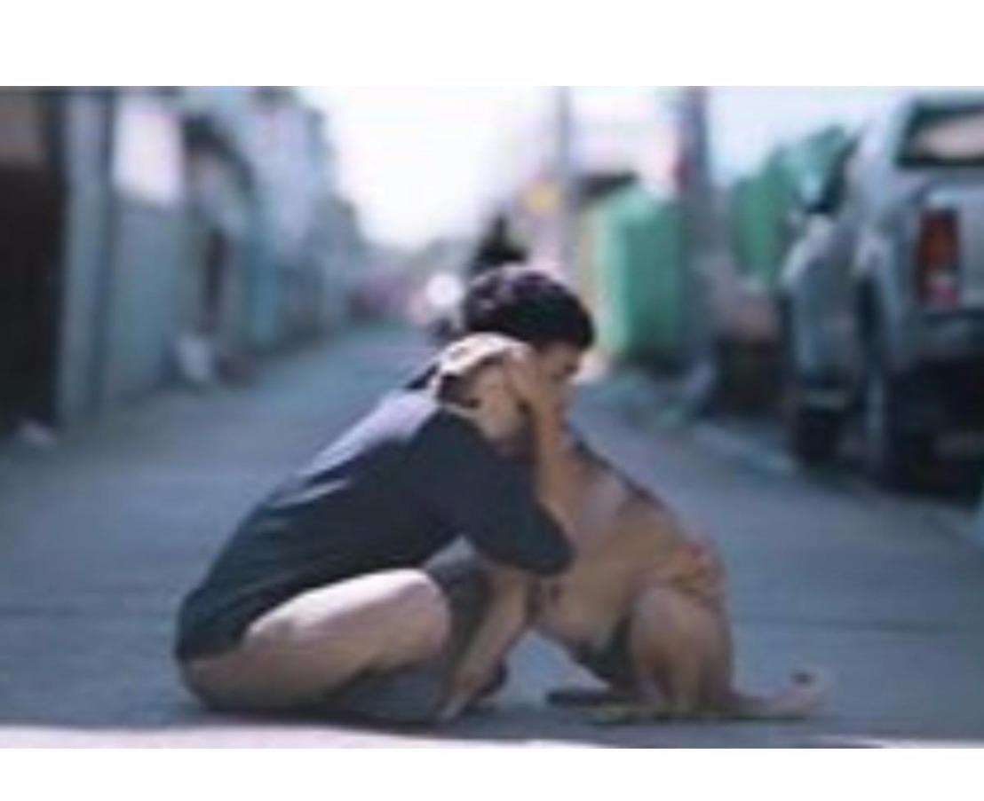 Vídeo mostra a reação dos cães de rua ao serem abraçados por jovem. Tente não seemocionar