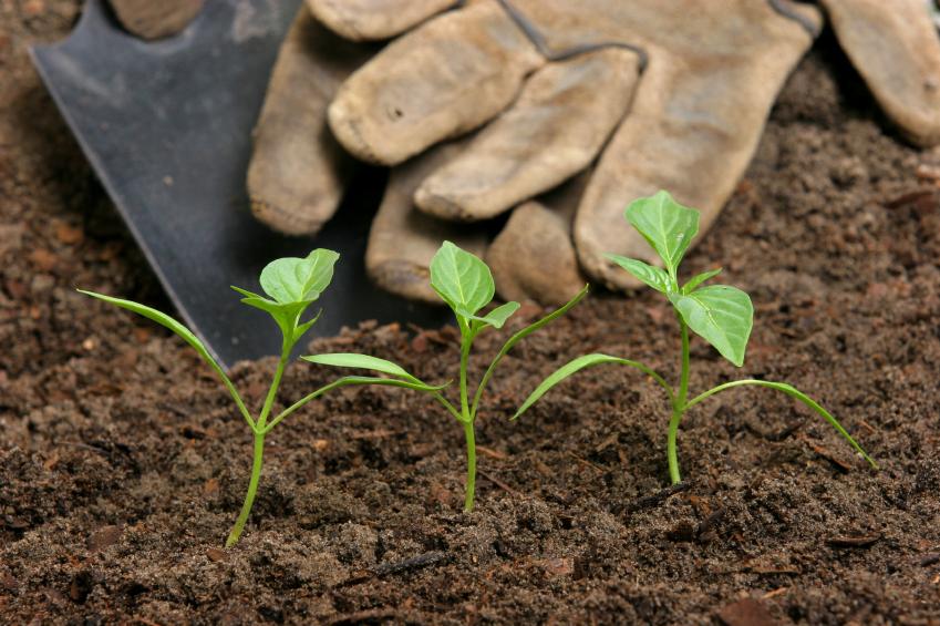 12 passos para começar uma hortacomunitária