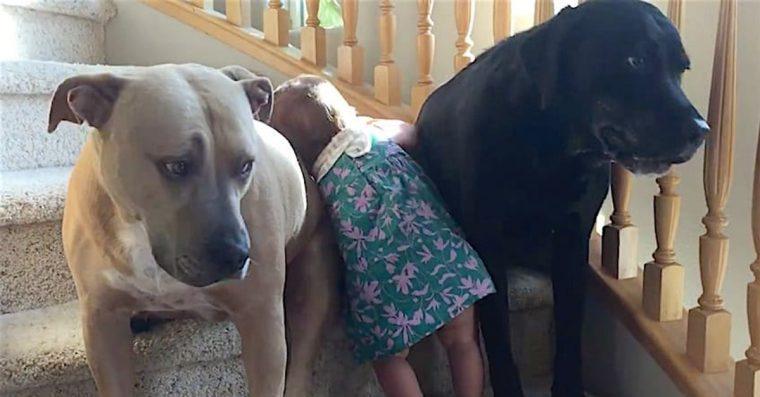 Bebê tenta subir as escadas mas cachorros impedem :) =D Veja que fofos<3
