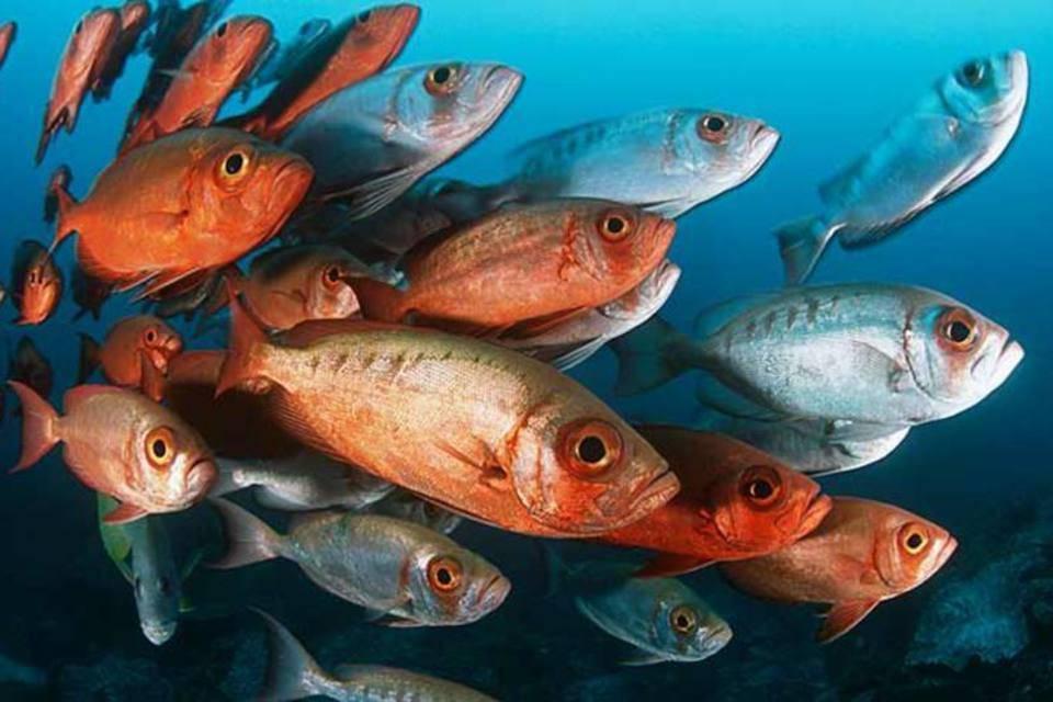 Peixes sentem e são inteligentes, afirmaestudo