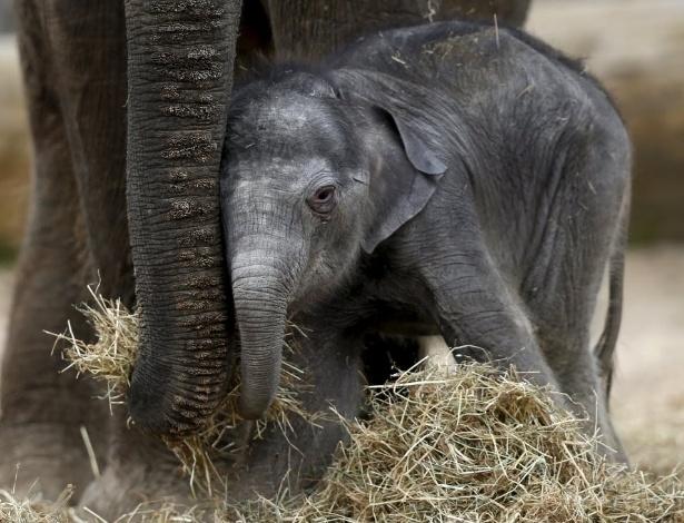 Elas são incríveis: o mundo animal dá exemplos de dedicaçãomaterna