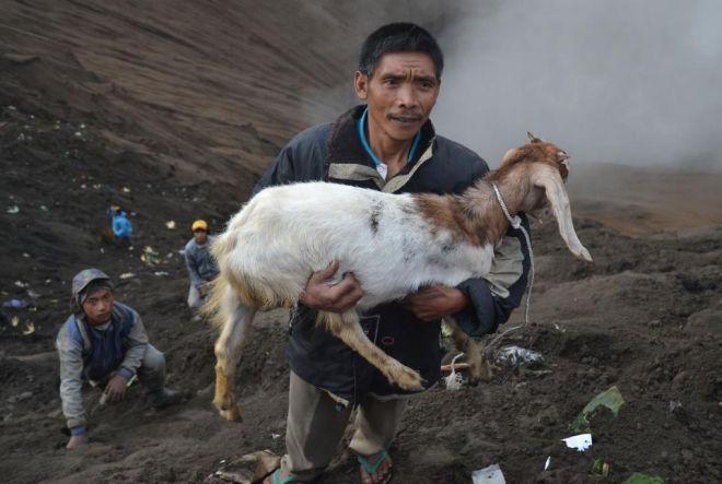 Ovelhas e cabras são jogadas em vulcão em nome de crençasreligiosas