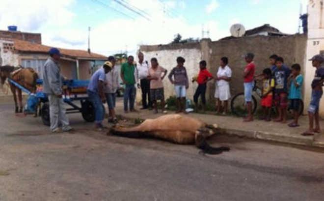 Cavalo vítima de maus-tratos morre no meio da rua em Vitória da Conquista,BA