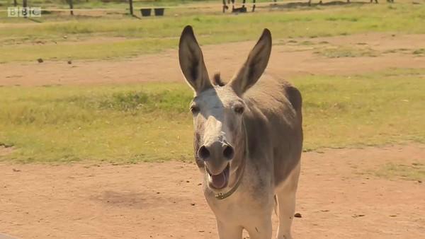 Caçadores promovem matança de burros na África para uso em medicina tradicionalchinesa