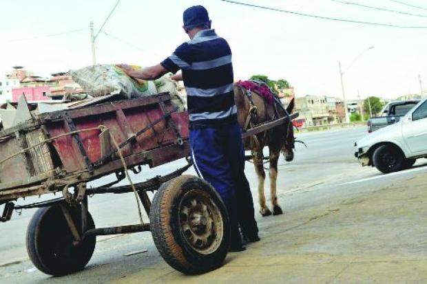 Prefeitura de BH vai tirar animais decarroças