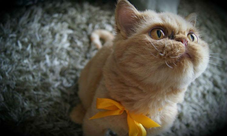 Clínica veterinária na Irlanda abre vaga para acariciador de gatos=D