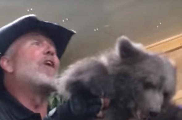 Ursa grita e urina em pânico ao ser explorada por proprietário dezoo