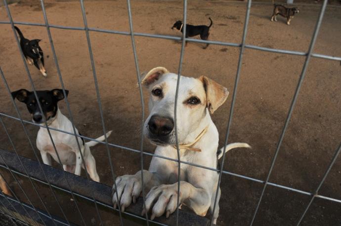 Lei que determina controle populacional de cães e gatos entra em vigor noBrasil