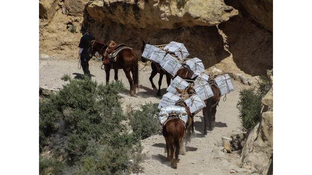 Cavalos famintos e explorados pelo turismo são abandonados para morrer no GrandCanyon